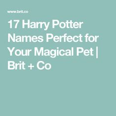 17 Harry Potter Names Perfect For Your Magical Pet Harry Potter Pet Names Harry Potter Dog Names Harry Potter Cat Names