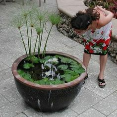 Build a Container Water Garden to Cure Your Pond Cravings