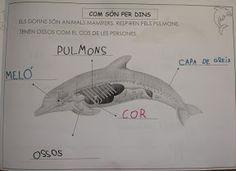 ALBUM PROJECTE EL DOFÍ - m.àngels t - Álbumes web de Picasa Projects For Kids, Whale, Album, Oceans, Nature, School, Picasa, Ducks, Dolphins