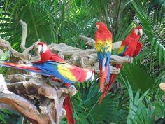 Grupo de guacamayos