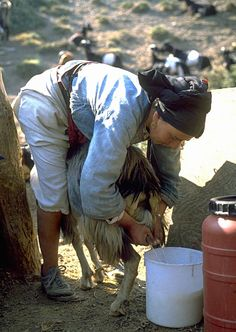 Milking The Goat In Greece Zorba The Greek, Karpathos, Combat Boots, Sailing, Greece, Traditional, Country, Vintage, People