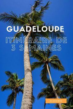 Guadeloupe l Itin�raire de 3 semaines, bonnes adresses et coups de coeur - Ti' Piment Travel Advice, Travel Tips, Les Bahamas, Marie Galante, Whale Watching, Coups, Family Travel, Places To Travel, Caribbean