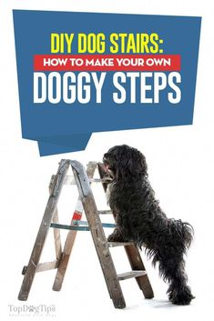 Every dog can benefit from stairs to help them onto beds, furniture and other high places. These DIY dog stairs are easy to make and cheap to make! Dog Stairs For Bed, Dog Furniture, Steel Furniture, Furniture Companies, Furniture Ideas, Bedroom Crafts, Dog Steps, Dog Rooms, Diy Wood Signs
