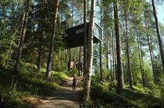 the cabin (treehotel)