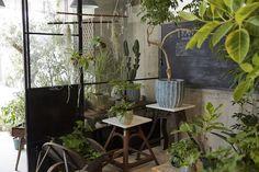 武蔵小山 TRANSHIP Green Flowers, Pretty Little, Indoor Plants, Interior, Garden, Fashion News, Challenge, Home Decor, Lifestyle