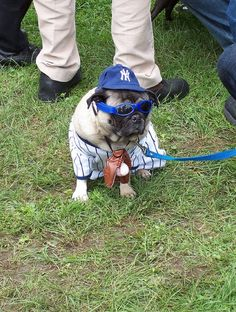 Pugs In Costumes ~ ...........click here to find out more http://googydog.com