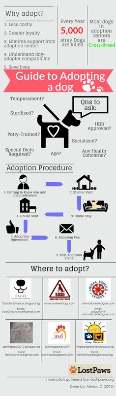 Guide to Adopting a Dog