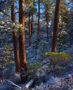 forest in winter  http://www.metacafe.com/watch/yt-9NV6F0d2j6k//