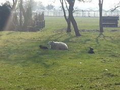 Dutch spring :)
