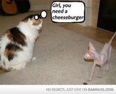 Funny Cats rule! Girl You need a cheeseburger! Cat meme http://www.funnycatsblog.com
