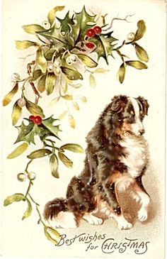 vintage christmas dog postcards - Google Search
