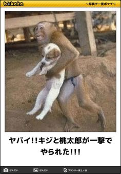 Get a Monkey Saves Dog funny picture from Animals. You can get dozens of other funny pictures from Animals. Here are some samples of funny words: monkey, saves, dog Cute Baby Animals, Animals And Pets, Funny Animals, Wild Animals, Animals And Their Babies, Funniest Animals, Jungle Animals, Beautiful Creatures, Animals Beautiful