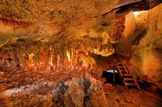 """Capricorn Caves, showing a limestone cavern with stalagtites and stalagmites, known as """"The Harp"""". Situated near Rockhampton, Queensland, Australia Brisbane To Cairns, Limestone Caves, Adventure Activities, Holiday Destinations, Capricorn, Kayaking, Places To Go, Queensland Australia, Cas"""