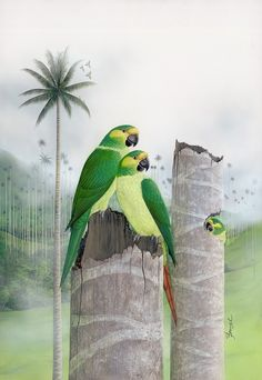 Watercolor Painting Techniques, Watercolor Paintings, Bob Ross, Beautiful Places, Bird, Wallpapers, Tatoo, Parakeet, Exotic Birds