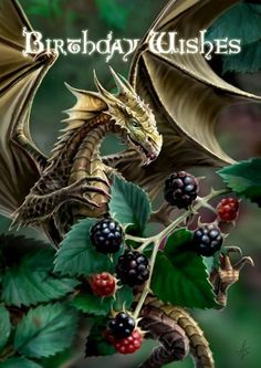 Blackberry Dragon Card