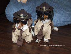 Super troopers from last Halloween https://www.facebook.com/SpoiledLittleDachshunds?ref=hl