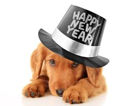 Pets wishes everyone and their pets a Happy New Year!Macarthur Pets wishes everyone and their pets a Happy New Year! Happy New Year Dog, Happ New Year, Pet Sitting, Wellness, What Can I Do, Dog Photos, Animals Photos, New Years Eve, Puppy Love