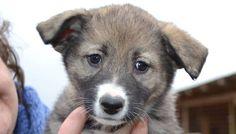 Rate this post Steckbrief ✒ Angel sucht ein Zuhause (reserviert) Angel ist im Januar 2016 geboren und wird ein mittelgroßer Hund, ca. 50-55 cm. Bilder werden geladen…