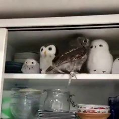 Are you my long lost brothers Cute Funny Animals, Cute Baby Animals, Animals And Pets, Cute Cats, Funny Owls, Cute Animal Videos, Funny Animal Pictures, Cute Creatures, Pet Birds