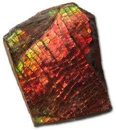 Unprocessed sample of Ammolite, a 'Dragon-Skin' pattern is apparent. Ammolite is a rare and valuable opal-like organic gemstone found primarily along the eastern slopes of the Rocky Mountains of North America. It is made of the fossilized shells of ammonites, which in turn are composed primarily of Aragonite, the same mineral that makes up nacreous pearls. It is one of several Biogenic-gemstones; others include Amber and Pearl.