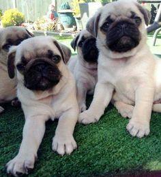 Puppies!!!!