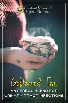 Goldenrod Tea: An Herbal Blend for Urinary Tract Infections   #goldenrod #solidago #herbalife #herbs #herbalism #herbalist #UTI