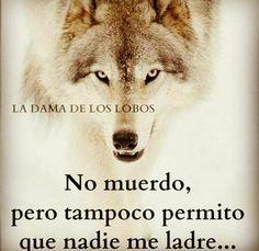 Por mis ancestros nunca dejaré de pelear x los míos Spanish Inspirational Quotes, Spanish Quotes, Wolf Quotes, Me Quotes, Good Night Prayer, Wolf Life, Quotes En Espanol, Wolf Pictures, Lone Wolf