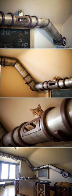 Cat House Plans 21 Creative Design Ideas That Will Make Your House Awesome – Cat Transit System Cat House Plans, Cat House Diy, Steampunk Furniture, Gatos Cats, Cat Enclosure, Cat Room, Cat Cafe, Cat Condo, Pet Furniture