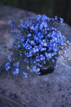 Myosotis Bouquet - Forget me not flowers Arrangements Ikebana, Flower Arrangements, Deco Floral, Arte Floral, Forget Me Not, Flower Aesthetic, Flower Wallpaper, Pretty Flowers, Flower Power