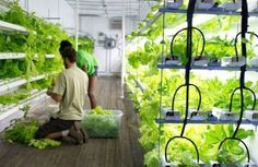 Stony Brook's new hydroponic 'Freight Farm' can grow up to 1,200 lettuce heads a week right on campus in a shipping container.