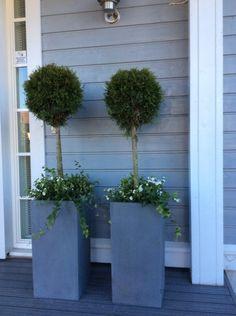 Front Porch Flowers, White Oak Tree, Pot Jardin, Garden Projects, Artificial Flowers, Garden Pots, Outdoor Gardens, Flower Pots, Garden Design