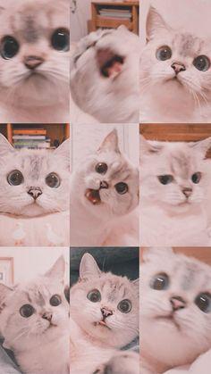Iphone Wallpaper Cat, Funny Cat Wallpaper, Cute Panda Wallpaper, Bear Wallpaper, Animal Wallpaper, Cute Cartoon Wallpapers, Wallpaper Wallpapers, Wall Wallpaper, Funny Cute Cats