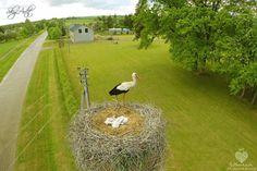 Stork's Nest,  Gandrų lizdas. Jonaitiškiu dvaras. Radviliškio r. #Radviliškis We love Lithuania - Photo by : Miroslav Jasovič.jpg (2048×1365)