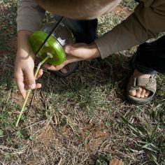 Un aspirateur à insectes, Explorateurs en herbe …