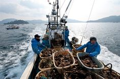 Kimimasa Mayama / EPA  Masashi Shirano, center, and his son Takashi, right, speed to another farming raft as they harvest oysters off Yamada.