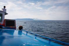 Mink Wal vor der Isle of Eigg. gesehen auf der Fähre nach Arsaig.