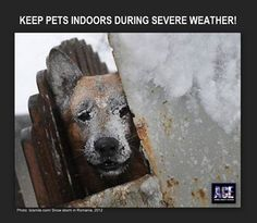 Your pets will freeze to death, and catch illnesses in when out in the cold. Please, don't do this to them this is torture!