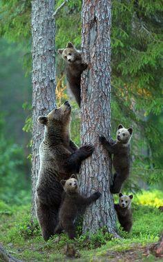 So many baby bears!!!!