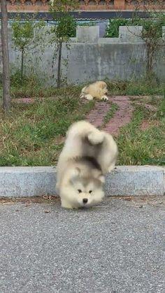 Cute Wild Animals, Baby Animals Super Cute, Cute Baby Dogs, Baby Animals Pictures, Cute Funny Dogs, Cute Animal Videos, Cute Little Animals, Cute Animal Pictures, Cute Funny Animals