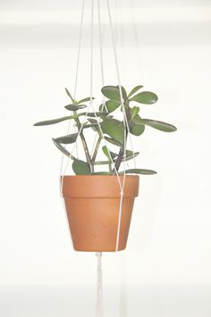 DIY hanging plant holder... did this once - use sturdy yarn instead of twine next time