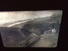 "Edward Curtis ""Harpoon Point"" Nootka Native American photography 35mm slide  | eBay Native American Photography, Edward Curtis, Wedding Pictures, Nativity, History, Painting, Ebay, Art, Art Background"
