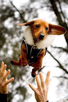 flying weenie.