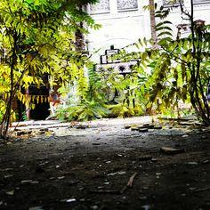 die natur kommt wieder! #lostplace #alt #ddr