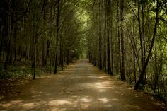Dapple Me - An unpaved road within the forest