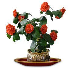PNG Virágok vázába,- csokrok...