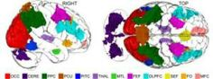 """""""How and Where Imagination Occurs in Human Brains:  Eleven areas of the brain are showing differential activity levels in a Dartmouth study using functional MRI to measure how humans manipulate mental imagery..."""" (article)  [www.ScienceDaily.com]"""