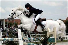 Dexter Leam Pondi, 1991 Connemara Pony stallion by Leam Finnigan. I adore connemaras.