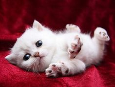 Adorable Kitten wanting to play