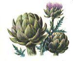 liste plantes tinctoriales