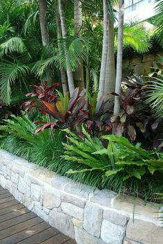 Easy and simple landscaping ideas and garden designs, drawing cheap pool landscaping ideas for backyard, front yard landscaping ideas, low maintenance Tropical Backyard Landscaping, Landscaping Around Trees, Tropical Garden Design, Florida Landscaping, Tropical Plants, Front Yard Landscaping, Landscaping Ideas, Privacy Landscaping, Backyard Ideas
